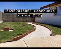 conchuela blanca jardin  La Serena y Coquimbo